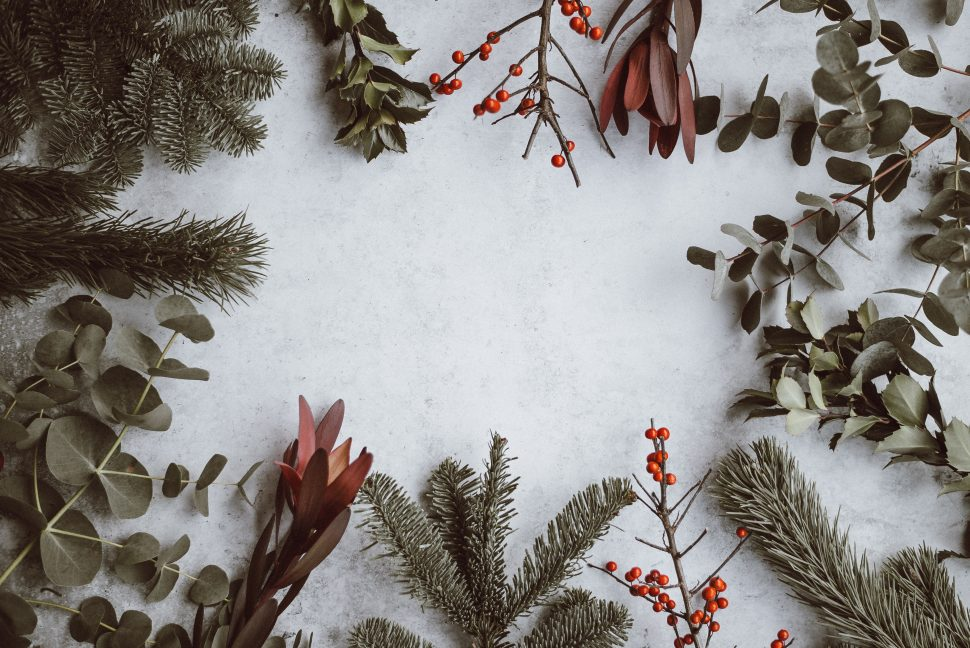 Holiday Evergreen Plants